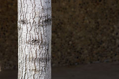 Дерево которое имеет сторону Стоковое Фото