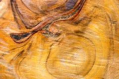 Дерево которое отрезало, Стоковая Фотография