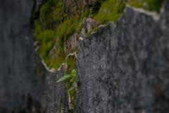 Дерево которые льют untidy на бетоне, Стоковая Фотография RF
