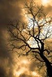 Дерево кошмара Стоковые Изображения RF