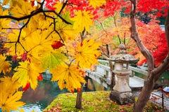 Дерево красивого conlorful кленового листа живое в autu перемещения Японии Стоковое Изображение