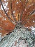 Дерево красоты большое Стоковое Изображение RF