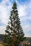 Дерево кривой в индийском положении Стоковые Изображения