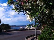 Дерево кривой и цветка дороги и море в backround Стоковые Изображения RF