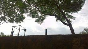 Дерево кудели Стоковые Фотографии RF
