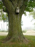 Дерево клена в тумане Стоковое Изображение RF