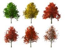Дерево клена на белой предпосылке иллюстрация штока