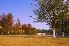 Дерево клена осени Стоковые Фотографии RF