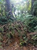 Дерево лестницы корня стоковая фотография rf