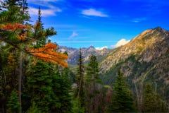 Дерево лиственницы в осени смотря в долину горы Стоковая Фотография
