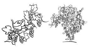 Дерево лозы и чертеж плода бесплатная иллюстрация