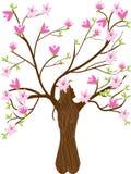 Дерево магнолии Стоковые Изображения