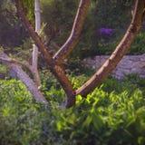 Дерево магнолии Стоковое фото RF