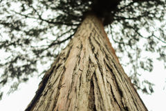 Дерево макроса Стоковое Фото