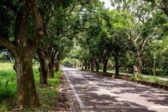 Дерево манго как тоннель стоковые фото