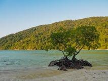 Дерево мангровы на море и горе предпосылки пляжа стоковые фотографии rf