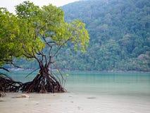 Дерево мангровы на море и горе предпосылки пляжа стоковое изображение