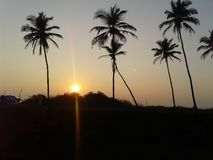 Дерево 2 между солнцем Стоковое Фото