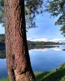 Дерево мира Стоковые Изображения RF