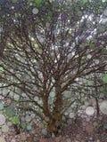 Дерево мозаики бесплатная иллюстрация