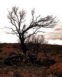 Дерево Моисея Стоковые Изображения RF