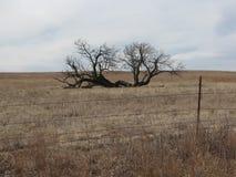 Дерево молнии стоковые изображения rf