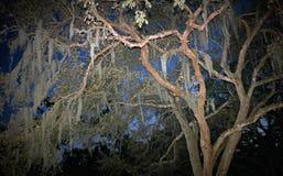 Дерево мха на сумраке Стоковое Изображение RF