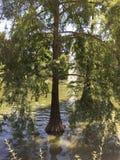 Дерево над озером в парке retiro в Мадриде стоковое фото