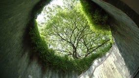 Дерево над подземной прогулкой сток-видео