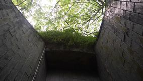 Дерево над подземным тоннелем дорожка кирпича на парке видеоматериал