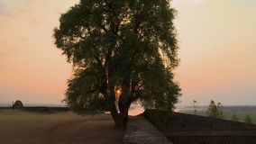 Дерево над стенами сток-видео