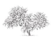 Дерево нарисованное рукой Стоковое Изображение