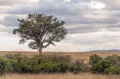 Дерево на африканской саванне Стоковые Фотографии RF