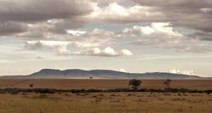 Дерево на африканской саванне Стоковые Изображения