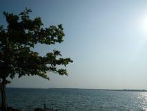 Дерево на банке река Стоковая Фотография