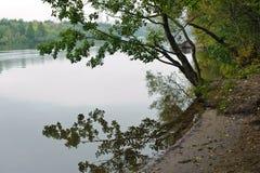 Дерево на банке Стоковая Фотография