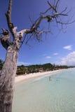 Дерево на белом пляже Стоковые Изображения
