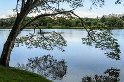 Дерево на берегах озера полагаясь над водой и делая отражение стоковые фотографии rf