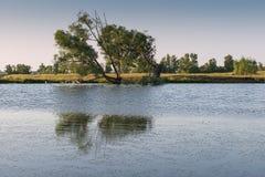 Дерево на береге пруда Стоковое Изображение