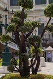 Дерево на большом дворце, Бангкок, Таиланд стоковая фотография rf