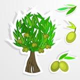 Дерево на бумаге красивейшей одетьнные бутылкой специи оливки масла Оливковое дерево вектора Стоковые Изображения RF