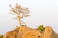 Дерево на верхней горе стоковая фотография