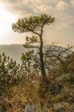 Дерево на верхней части горы Стоковые Фото
