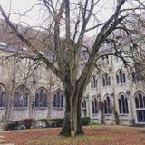 Дерево на дворе Стоковые Изображения RF