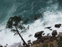 Дерево над волнами стоковая фотография rf