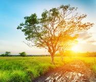 Дерево на времени захода солнца. Ландшафт лета Стоковая Фотография RF