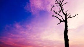 Дерево на времени захода солнца, сумраке, рассвете на озере Стоковые Фото