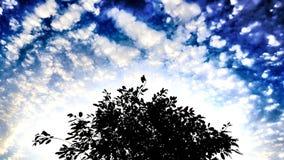 Дерево на голубых предпосылке и облачном небе Стоковые Изображения RF