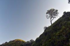 Дерево на гребне горы стоковое фото rf