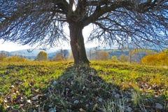 Дерево на желтой предпосылке деревьев осени Стоковое фото RF